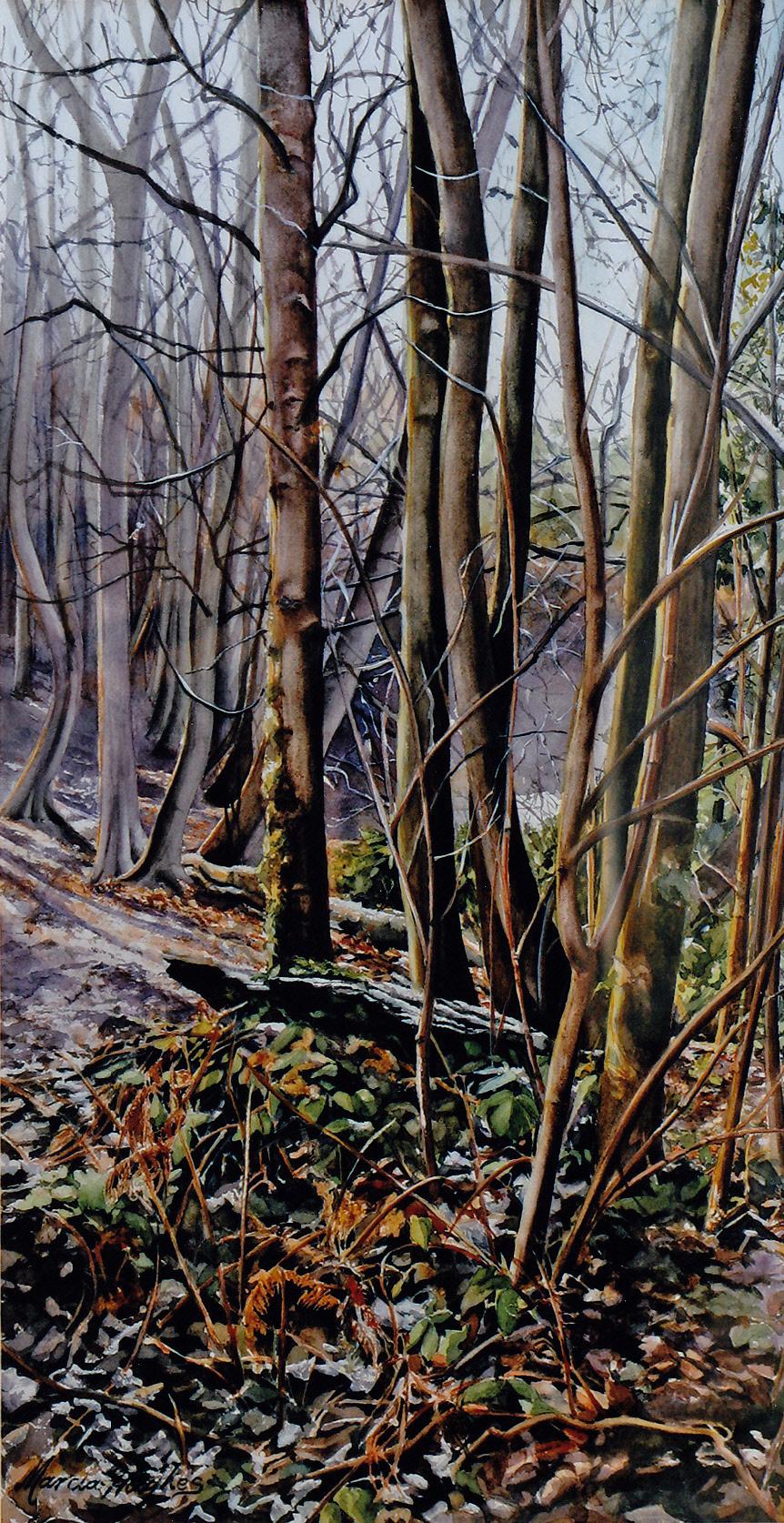 Esher Woods - MHughes