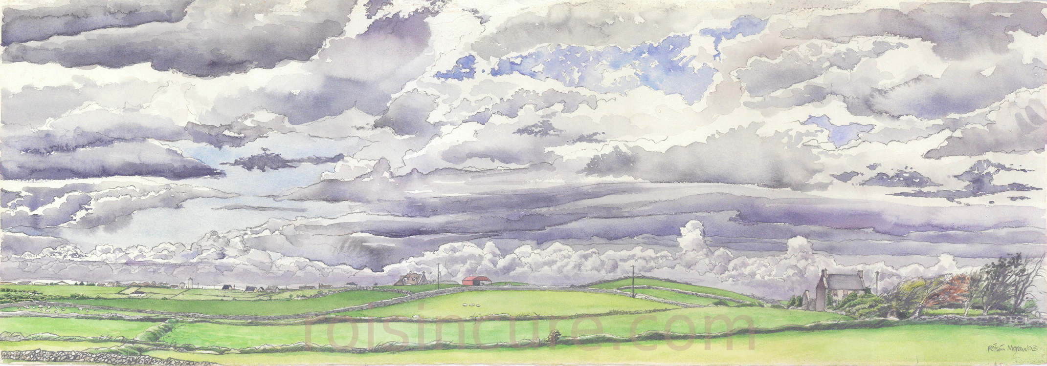 Fields of South Galway