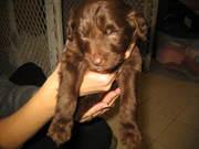 rachael's pics of puppies 016