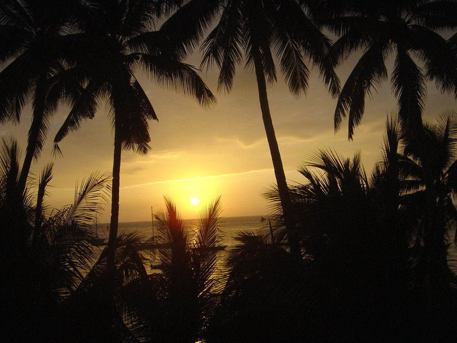 wallpaper_sunset_palms-2284