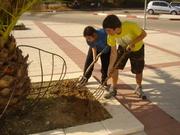 Jardinagem Alternativo em Israel