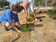 Jardineiros alternativos em Israel