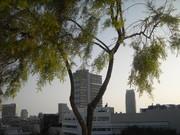 Tel Aviv - junho de 2010