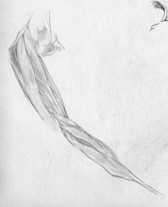 Skinned Arm