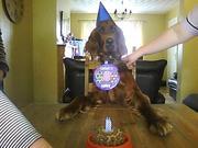 Rufus's 1st Birthday