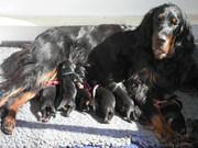 20 mei  puppies Ailis en Nash 005