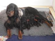20 mei puppies Ailis en Nash 008