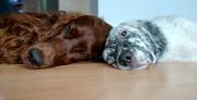 Riley and Amos II