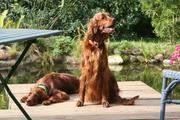 Lonka and Anouk enjoying last sun