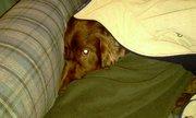 Finn hiding