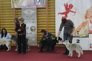 Larson's first dog show - very promising 1