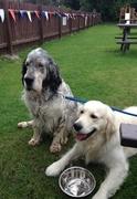 Saxon and Rydal at Peel