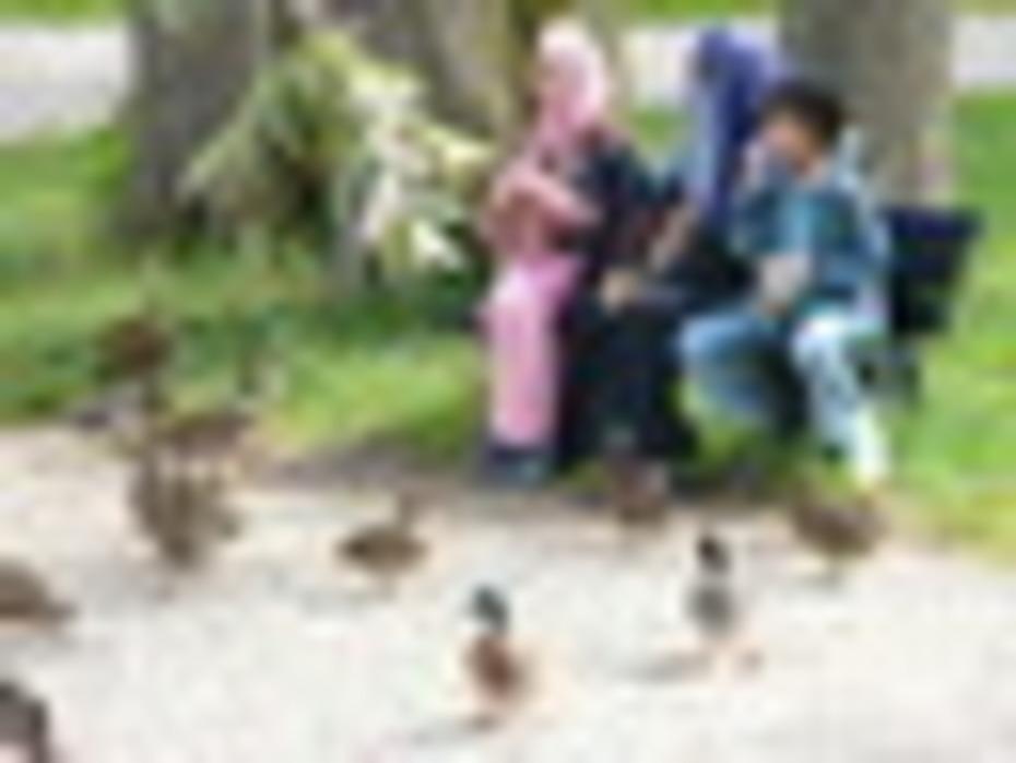 Muslims feeding pigeons in Bavaria