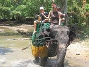 Elephant- back safari