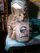 Tiger the little Eagles fan