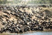 Tanzania safaris wildebeest migration serengeti