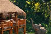 The Diphlu River Lodge, Kaziranga National Park