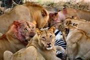 THE BEAUTY OF KENYA