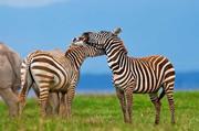 Travel Kenya vacations
