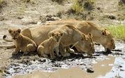 04Days-Kenya-Majestic-Adventure-Holiday