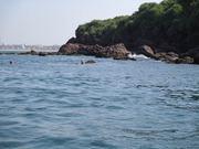 grand-island-dolphin-safari