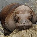 _JLM4553-walrus-baby-and-kulu-3-20-08