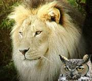 lion and owl