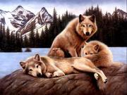 3 Wolves @ Lake