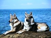 Wolves @ Ocean