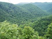 My WV Home