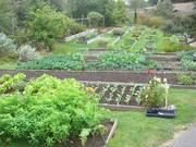 Stanford-Inn-Gardens