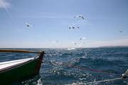 Fishing and Feeding