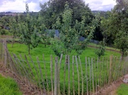 Nassau Crescent Community Garden apple trees