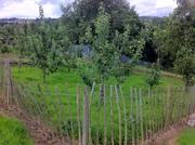 Nassau Crescent Community Garden apple trees