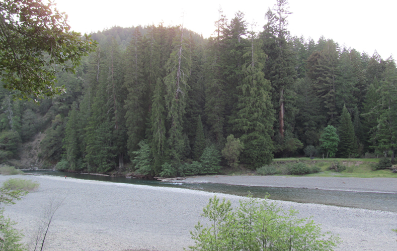 Eel Rive in Richardson Grove State Park