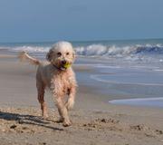 Marlow running on the beach