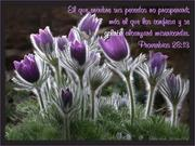 Proverbios 28.13