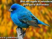 Dios nos regalo la naturaleza para que la disfrutemos