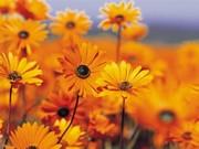 jardin_de_flores_amarillas-300x225