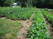 2011 garden
