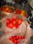 Time to make tomato sauce