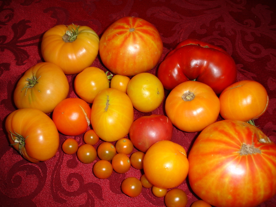 Gotta love the heirloom tomatos  ;)