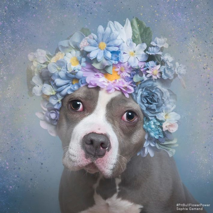 pretty pittie