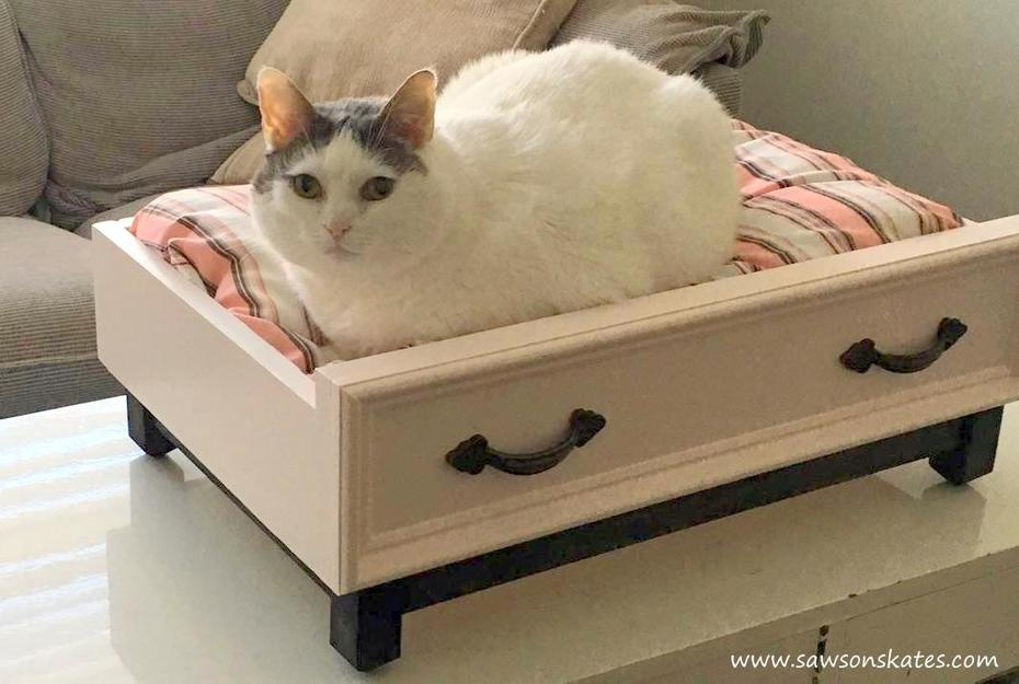 Cat in the DIY Dog Bed