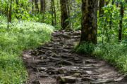 Porters Creek Trail, 4-11-19