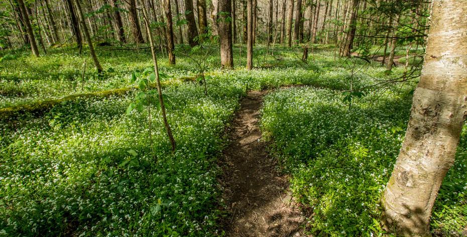 Small trail off Porters  Creek, 4-11-19