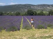 Lavendelveld bij Saint Remèze