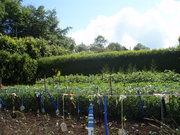 Love a Locavore's Kitchen Garden