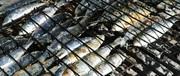 naked sardines