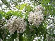 Plantas medicinales y elixires florales